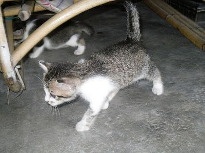 gambar anak kucing yang cukup comel dan cute