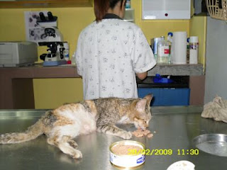 comel is eating some food at the vet clinic