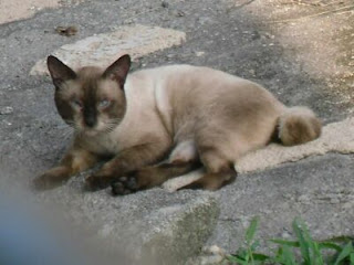 curious cat picture