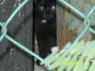 kucing hitam menyorok kerana takut