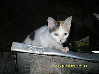 anak kucing tengah mengintip dari atas sinki