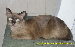 aku kucing Malaysia