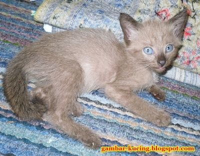 gambar anak kucing hidup