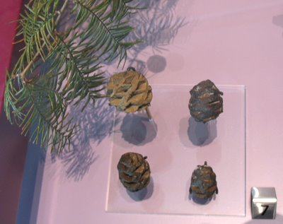 [VE_pinecone_fossils]