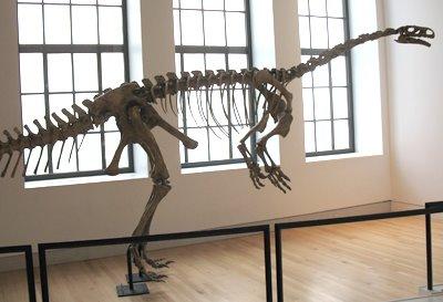 [VE_Plateosaurus_fossil]