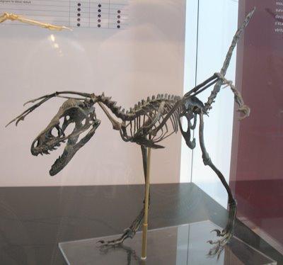 [VE_Bamiraptor_Fossil]