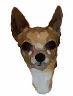 perro raza chihuahua