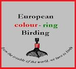 Anillos de color de observación de aves europeas