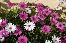 La belleza  hace presencia en la primavera 3-04-09