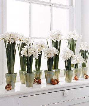 [paperwhites+in+glass+containers+via+Real+Simple.jpg]