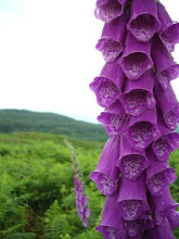 Foxglove Digitalis by DoGGa