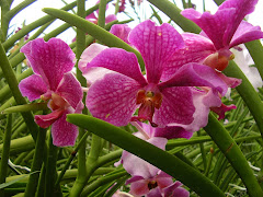 Orchid Gardens Singapore