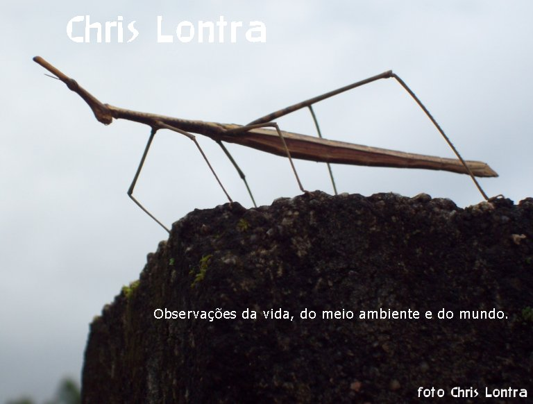 Chris Lontra