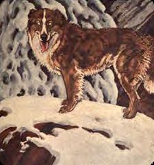 young woos memorandum the call of the wild