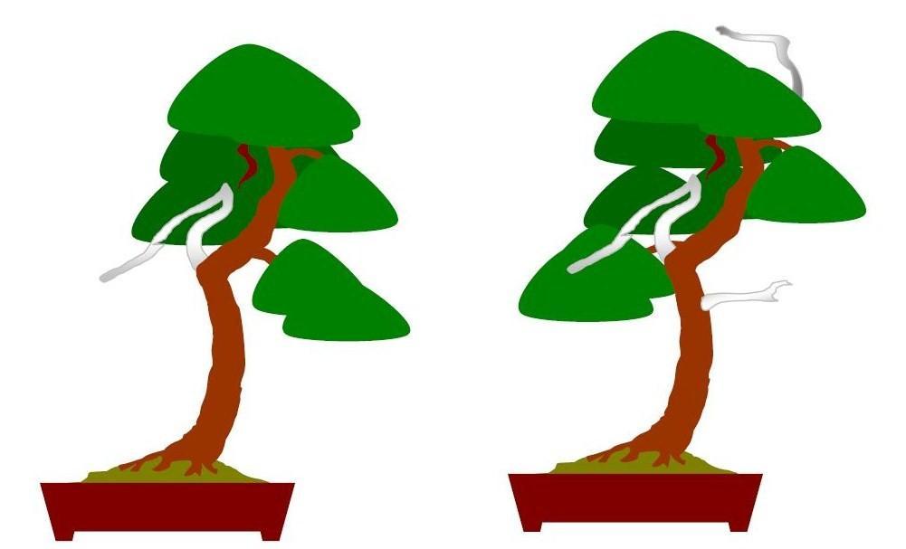 bonsai und beistellpflanzen pinus sylvestris waldkiefer. Black Bedroom Furniture Sets. Home Design Ideas
