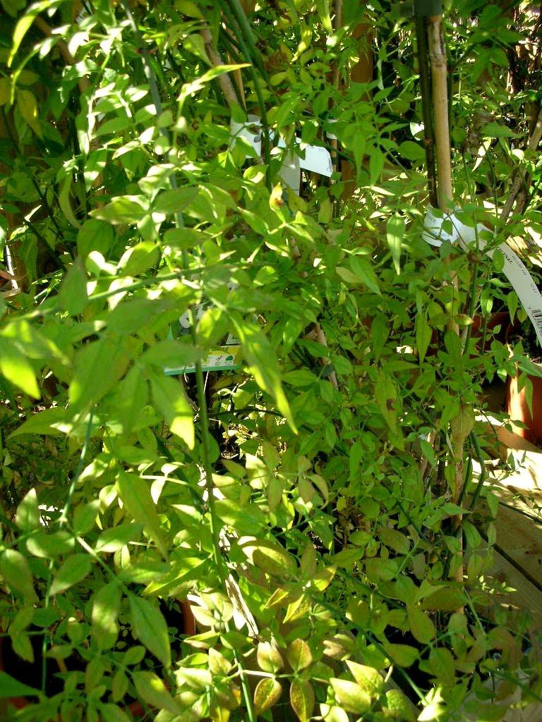 Plantes des jardins et des chemins molenbeek un jardin for Jardinerie des jardins