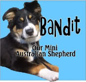 Bandit - Rykers little brother