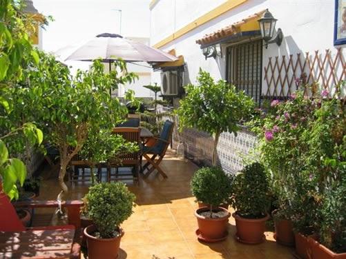 Plantas y jardineria decoraci n de la terraza for Jardineria y plantas