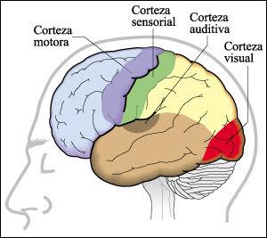 Información sobre la memoria humana | Información