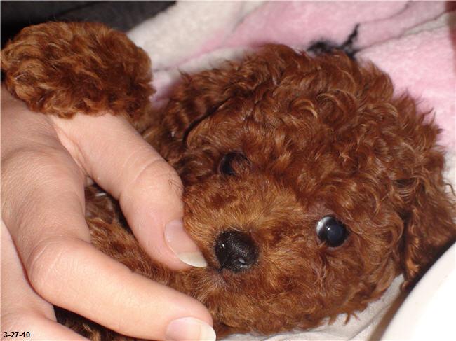 Alyssa's new puppy named Bella