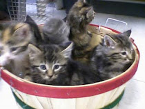 ADOPTABLE: KITTENS! X 6