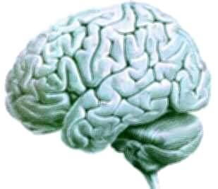Conoce a tu cerebro entra aqui