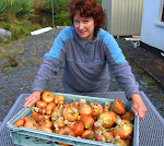 Eileen with organic onion harvest