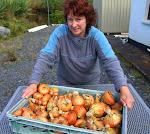 Eileen with organic onion harvest