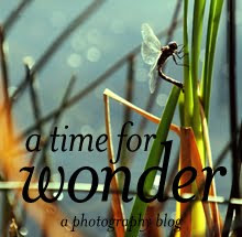 A Time for Wonder