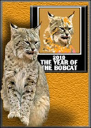 YEAR OF THE BOBCAT