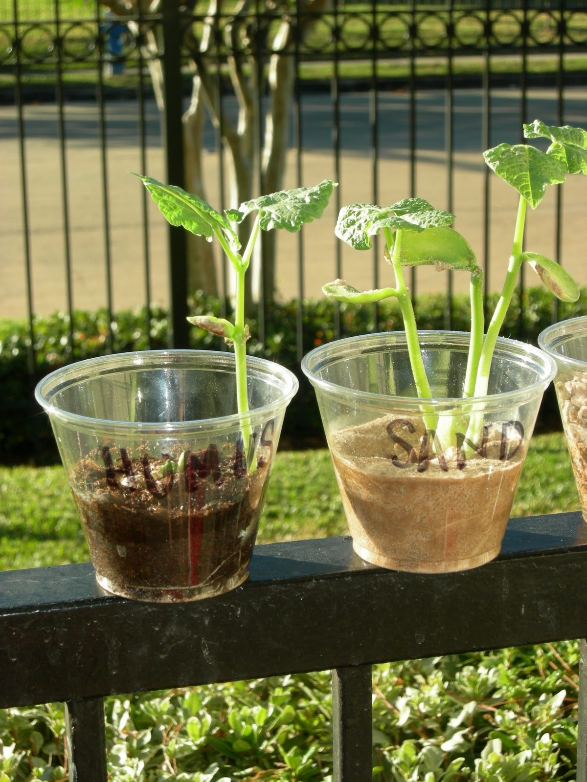 Which soil grows the best plant for Soil and plant lab