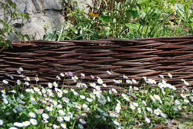 Un anno al giardino medievale di torino 2 parte for Rami di salice