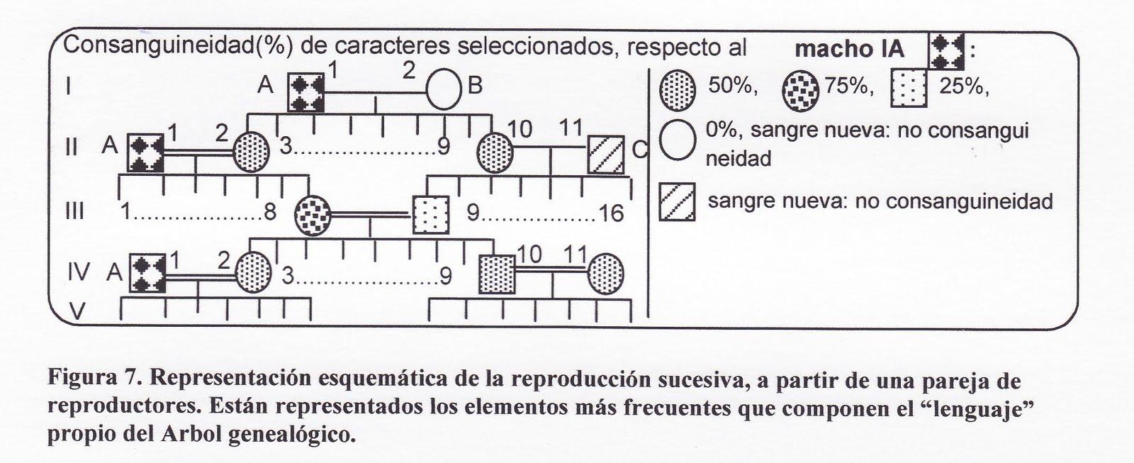 BLOG DE J.M. SANDUA: GENETICA Y HERENCIA EN LA CANARICULTURA DE CANTO