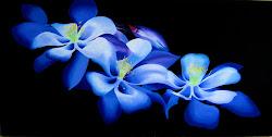 """""""2010 Floral Series"""""""