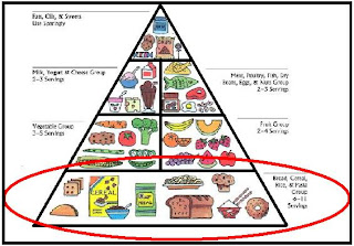 bottom of food pyramid