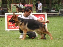Jorge Garcia con una perra de criadero peregrino