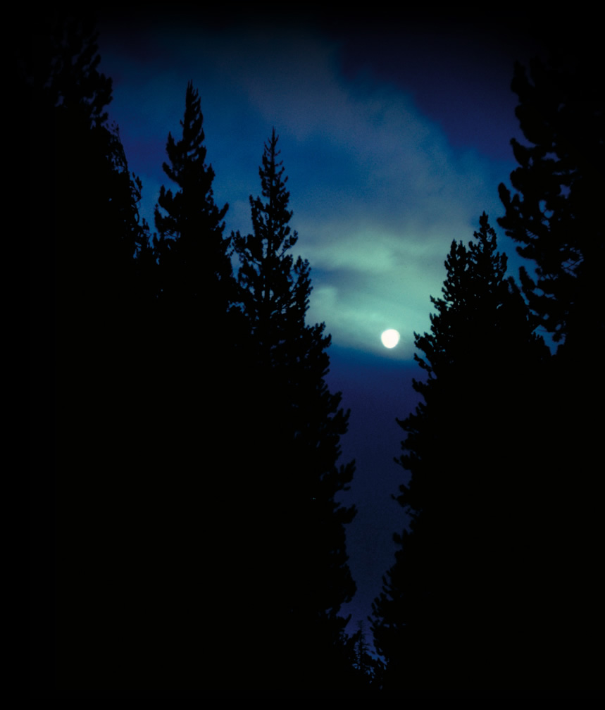 trees night moon blotch - photo #3