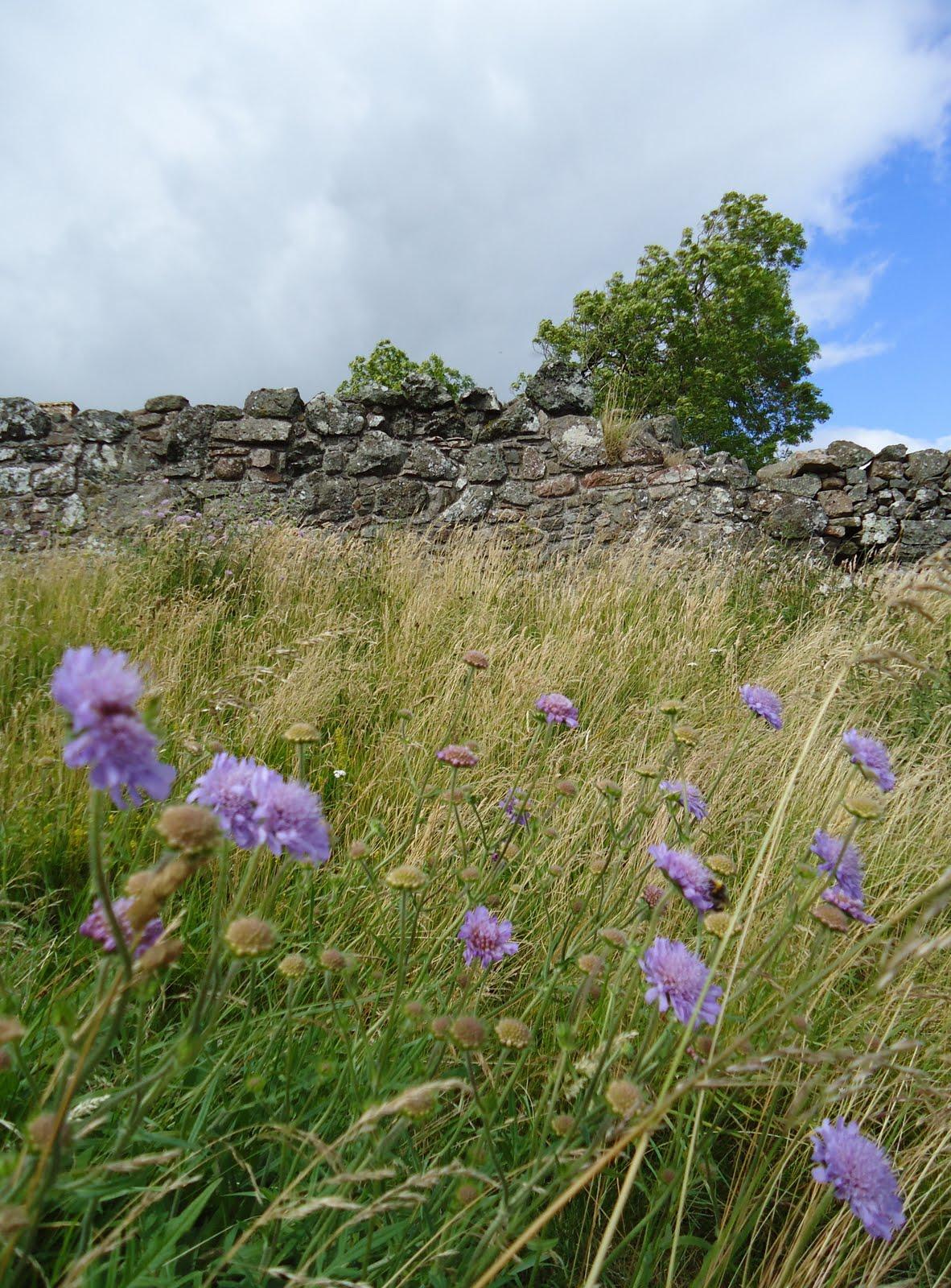 http://3.bp.blogspot.com/_zZ_nIoNkff8/TFhx71WxJiI/AAAAAAAAA4A/8peAcL6zZdQ/s1600/Tour+Perth+Dry+Stone+Wall+Scotland.jpg
