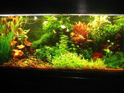 Rybki akwariowe gatunki Jaki zbiornik wybrać