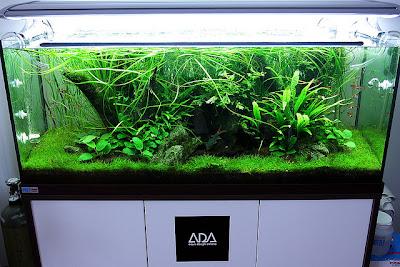 Ryby akwariowe gatunki - Gdzy sami budujemy akwarium cz2
