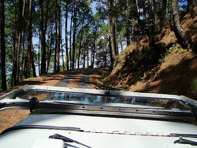 Visit to Binsar sanctuary in an open top jeep