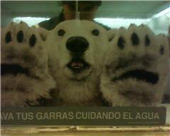 ¿Y dónde está el oso Pérez?