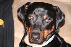 My beloved boy -- Brody