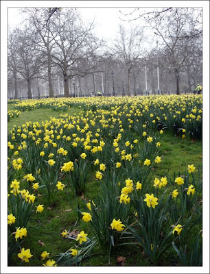daffodils poem by william wordsworth
