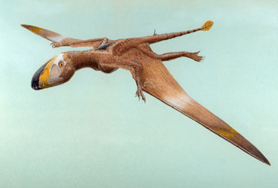 http://3.bp.blogspot.com/_zcJb6cqYEhc/TAqiM0Of-wI/AAAAAAAAABM/DDiv8ir2SwI/s1600/dimorphodon.jpg