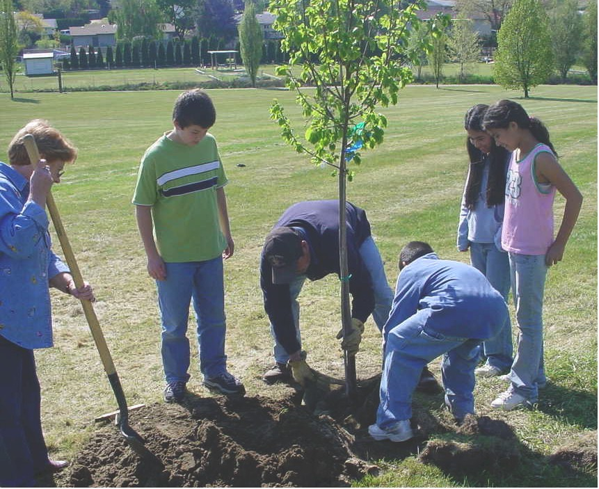 Planting A Tree. Help plant a tree garden bed