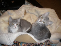 Samson and Delilah as kittens
