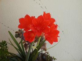 Flores naturais... da m/varanda rsss