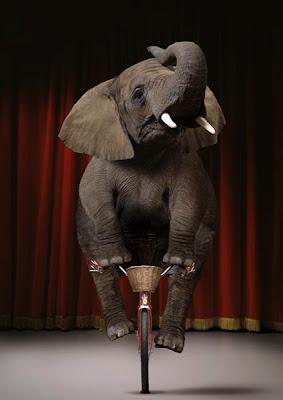 http://3.bp.blogspot.com/_zfycQnCrSoA/R8Dq2fwfNcI/AAAAAAAABK4/2pOhK4uNTkc/s400/Elefante:equilibrio.jpg