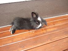 Min kanin